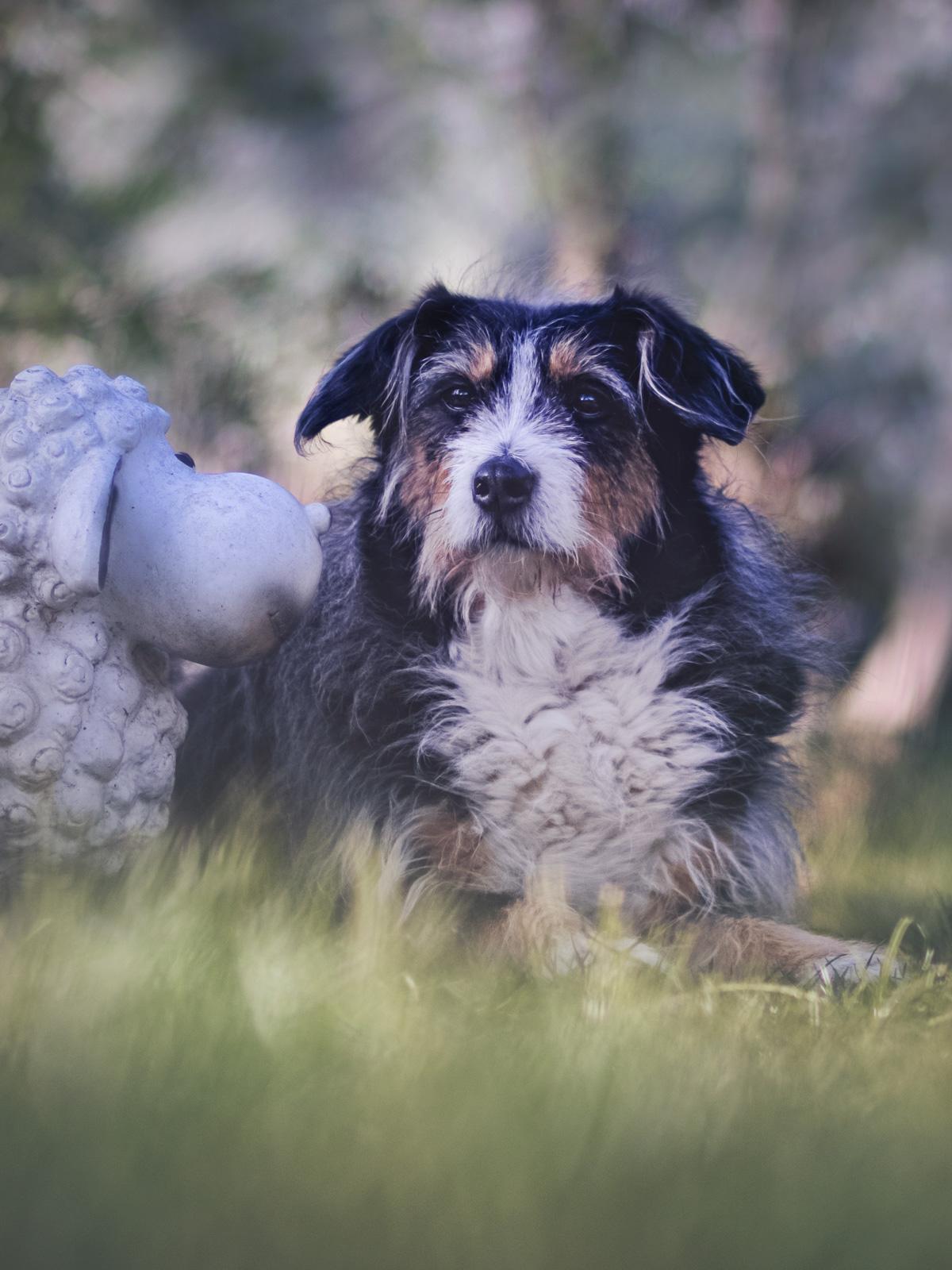 Mein Hund Queeny im Gras – die Allwissende