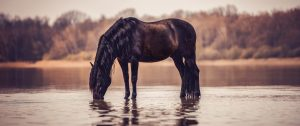 Andalusier steht am Strand im Wasser und säuft